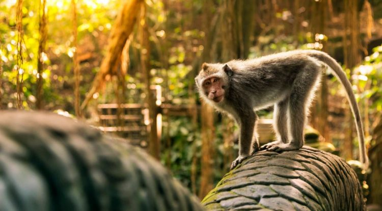 Sacred Monkey Forest - Travel 24 Jam di Ubud